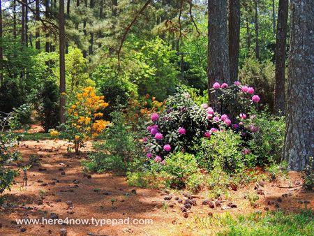 SC Botanical Garden_0033