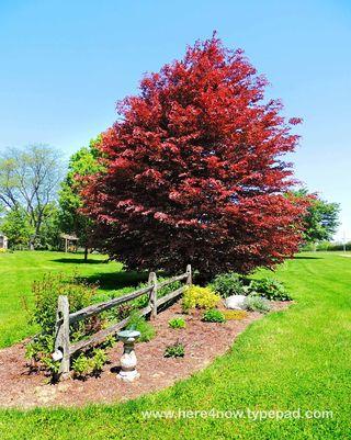 Quailcrest Gardens_0010
