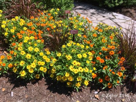 Cleveland Botanical Garden_22