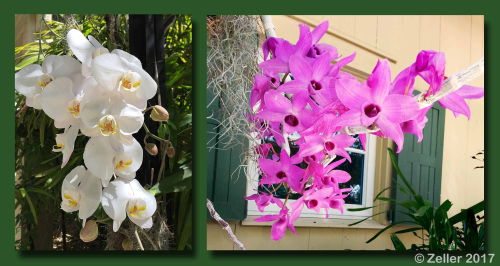 McKee Orchids