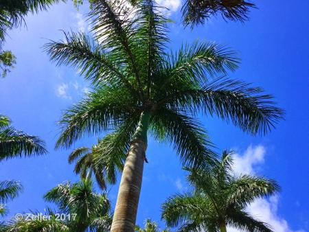 McKee Botanical Garden_iPad04