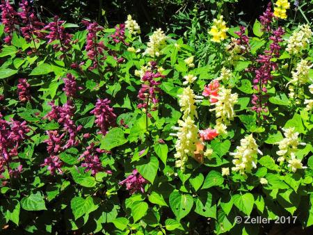 Magnolia Plantation_0003