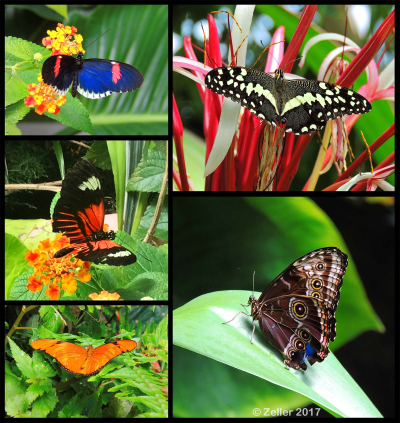 Butterfly Composite