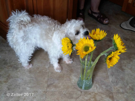 Freeway and Sunflowers_007