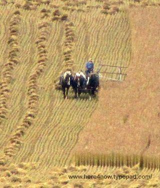 Making Hay_0020