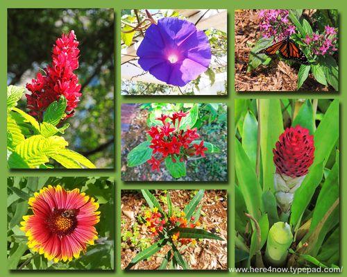 Garden Club Composite