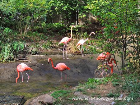 Pittsburgh Zoo_0007