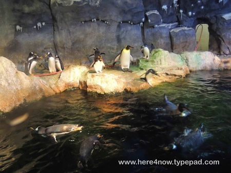 Pittsburgh Zoo_0053