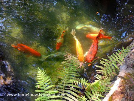 Cedar Lakes Gardens_0021