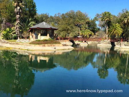 Cedar Lakes Gardens M_0088