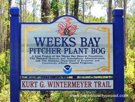 Pitcher Plant Bog_0016