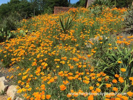 SC Botanical Garden_04