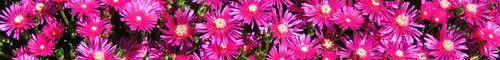 SC Botanical Garden_0009