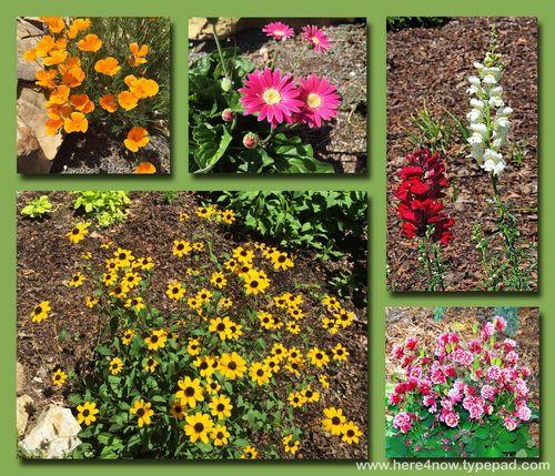 SC Garden Composite 1