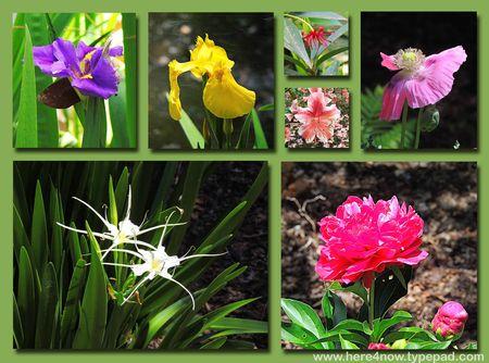 SC Garden Composite 2
