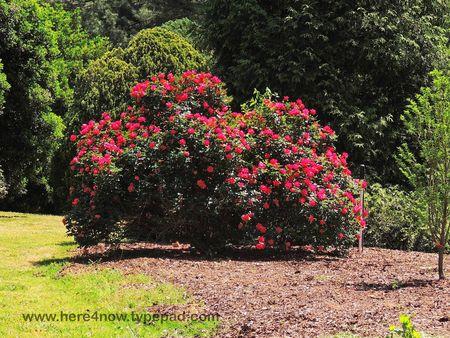 SC Botanical Garden_0032