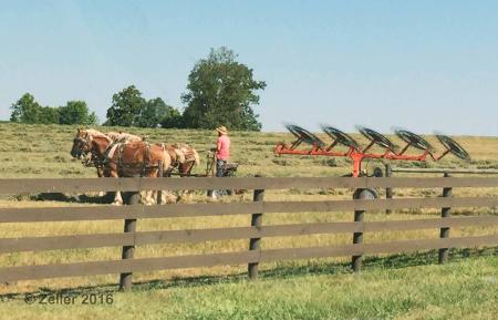 Amish Farmer_01