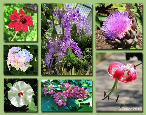 Cleveland Botanical Garden Composite