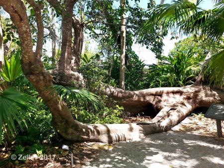McKee Botanical Garden_012