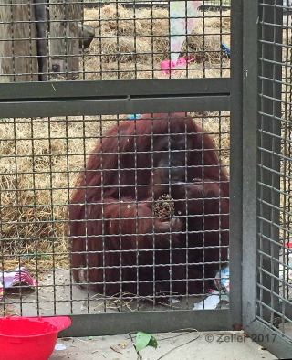 Center for Great Apes_010
