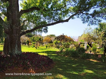 Sarasota Garden Club_0028