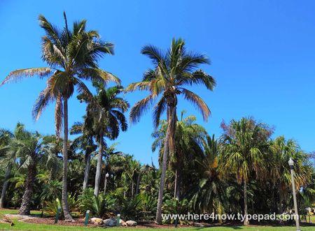 Palm Arboretum_0038