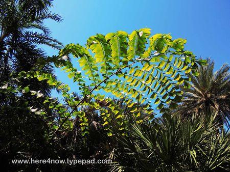 Palm Arboretum_0050