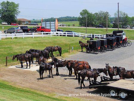 Amish Buggies_0035