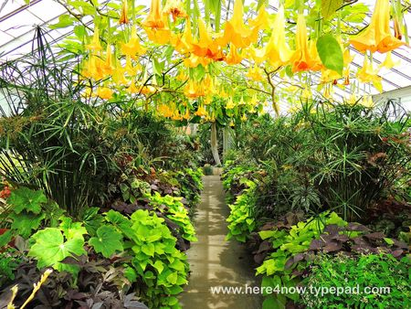 Kingwood Gardens_0058