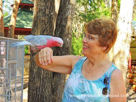 Cedar Lakes Gardens_0003