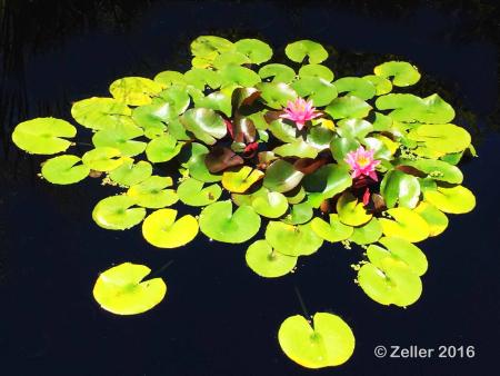 Cleveland Botanical Garden_02