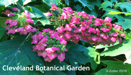 Cleveland Botanical Garden_09
