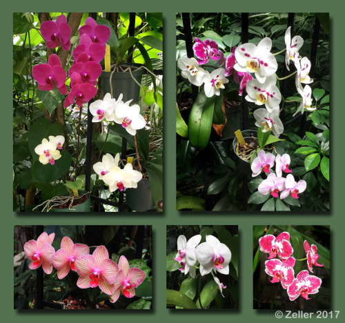 Plantation Orchid Composite