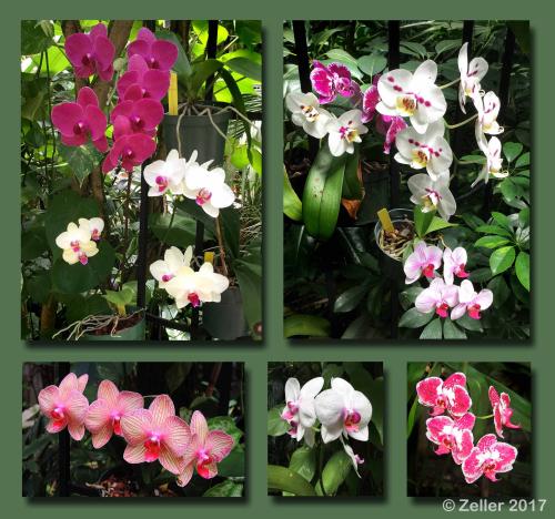 Plantation Orchid Composite