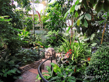 Franklin Park Conservatory_0004
