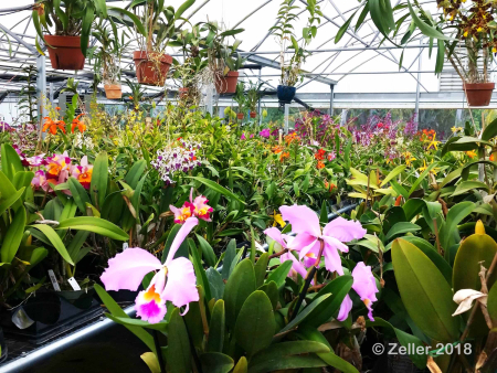 Palmer Orchids_001
