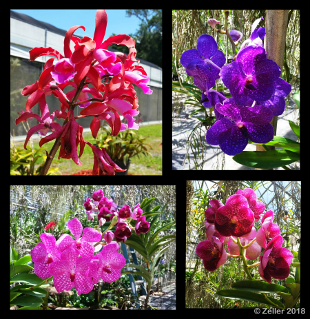 Palmer Orchid Composite