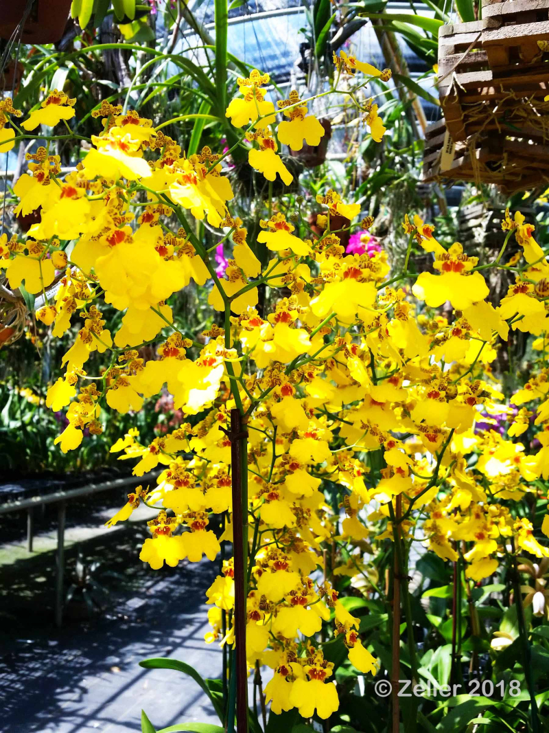 Palmer Orchids_009