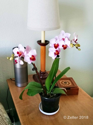 Orchid_015