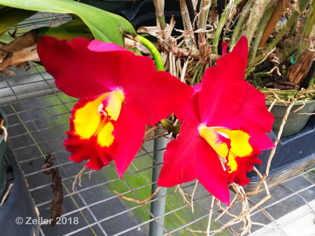Palmer Orchids_012