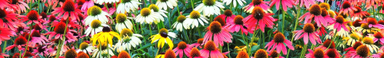 Kingwood Gardens_0055