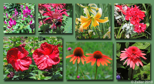 Kingwood Flower Composite