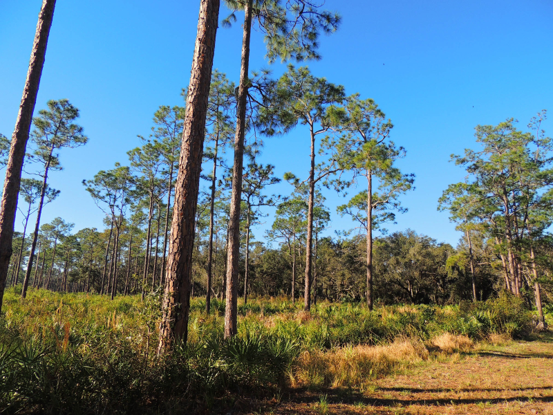 Highlands Hammock_0010