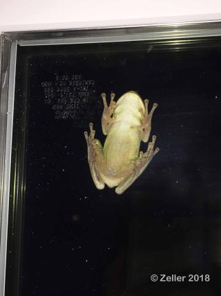 Tree Frog_08
