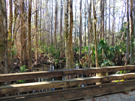 Highlands Hammock_0008