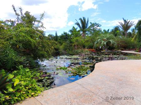 Naples Botanical Garden_0029