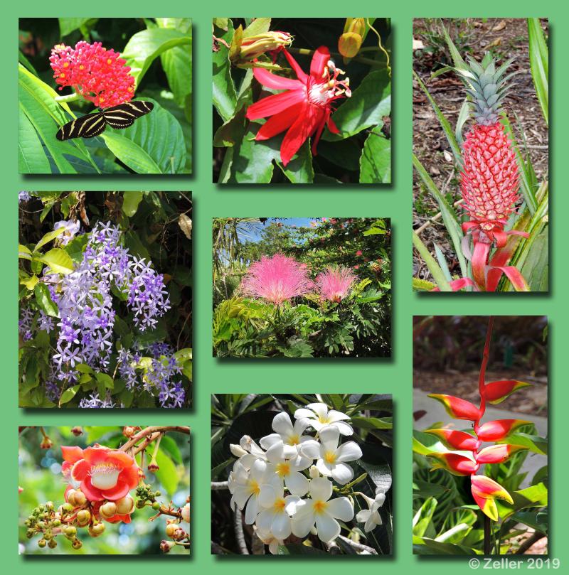 Flower Composite_0001