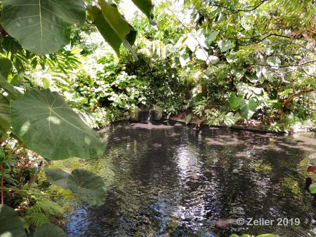 Naples Botanical Garden_0002