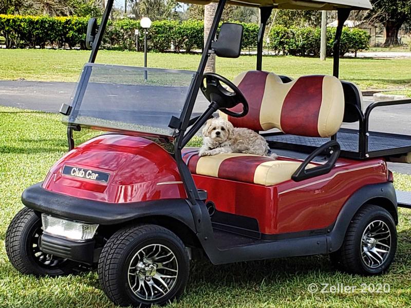 Freeway on Golf Cart_002