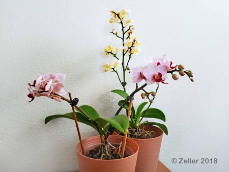 Orchids_008